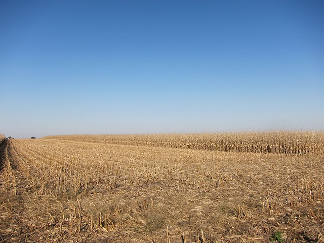 Corn field after combine
