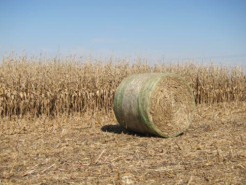 Corn Stalk Bale